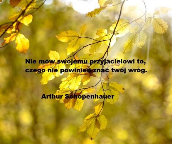 Cytaty Artura Schopenhauera O Prawdziwej Wolności Elblag24